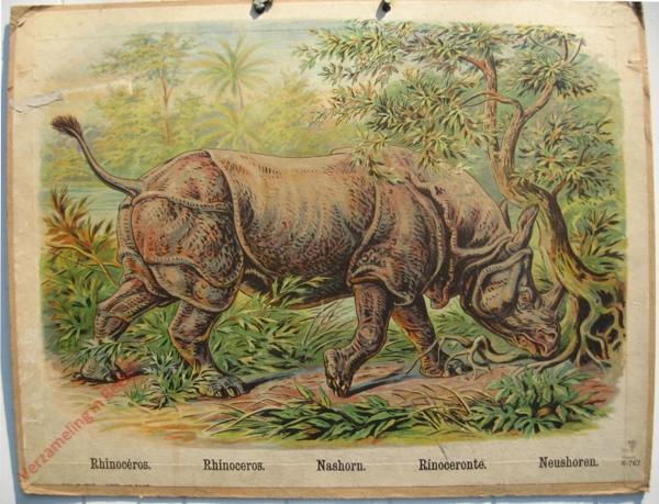 767 - Rhinoceros, Rhinoceros, Nashorn, Rinoceronte, Neushoren